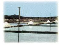 4)結晶した塩を通路に集めて・・・